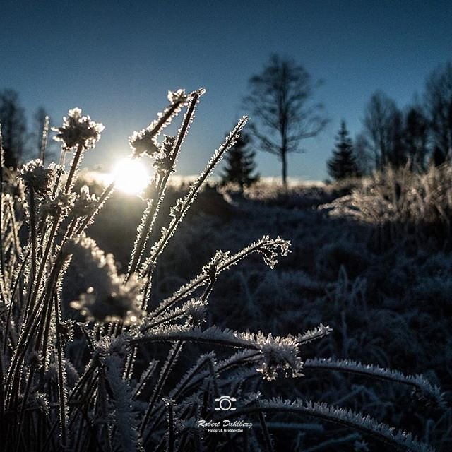 #sweden #nature #sony #rx100iv